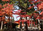 Pagoda and temples in the autumn foliage, Mount Koya
