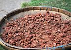 Dried betel nut, Flores