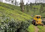 Locals working the tea plantations of Munnar