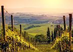 Vineyards, Chianti, Tuscany