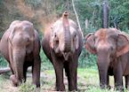Elephant camp, Mondulkiri, Cambodia