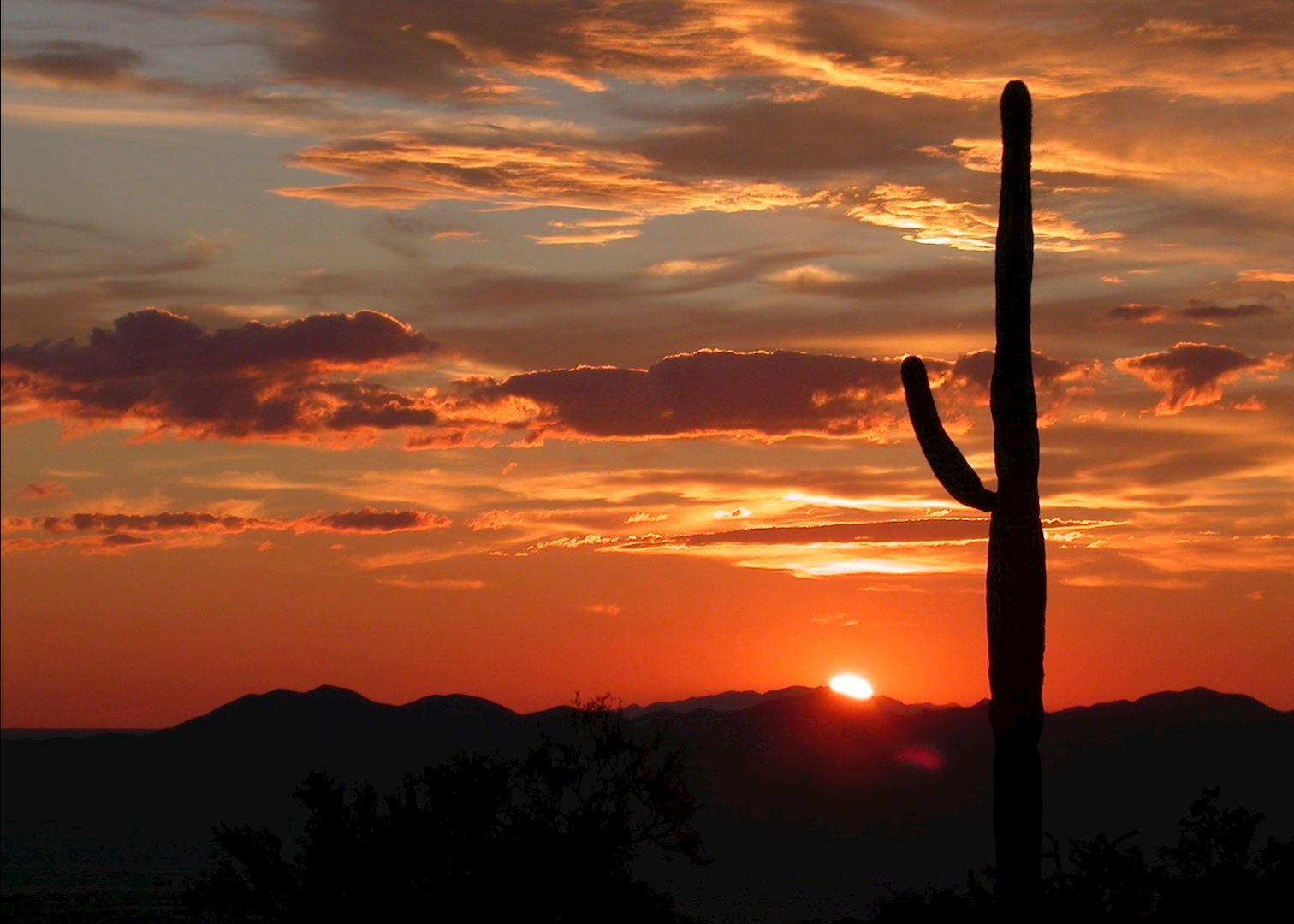 Saguaro cactus at sunset saguaro national park near tucson arizona