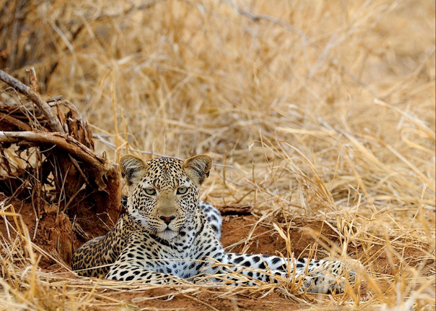 Pemba South Tanzania  city pictures gallery : Tanzania's Remote South: Ruaha & Pemba | Audley Travel