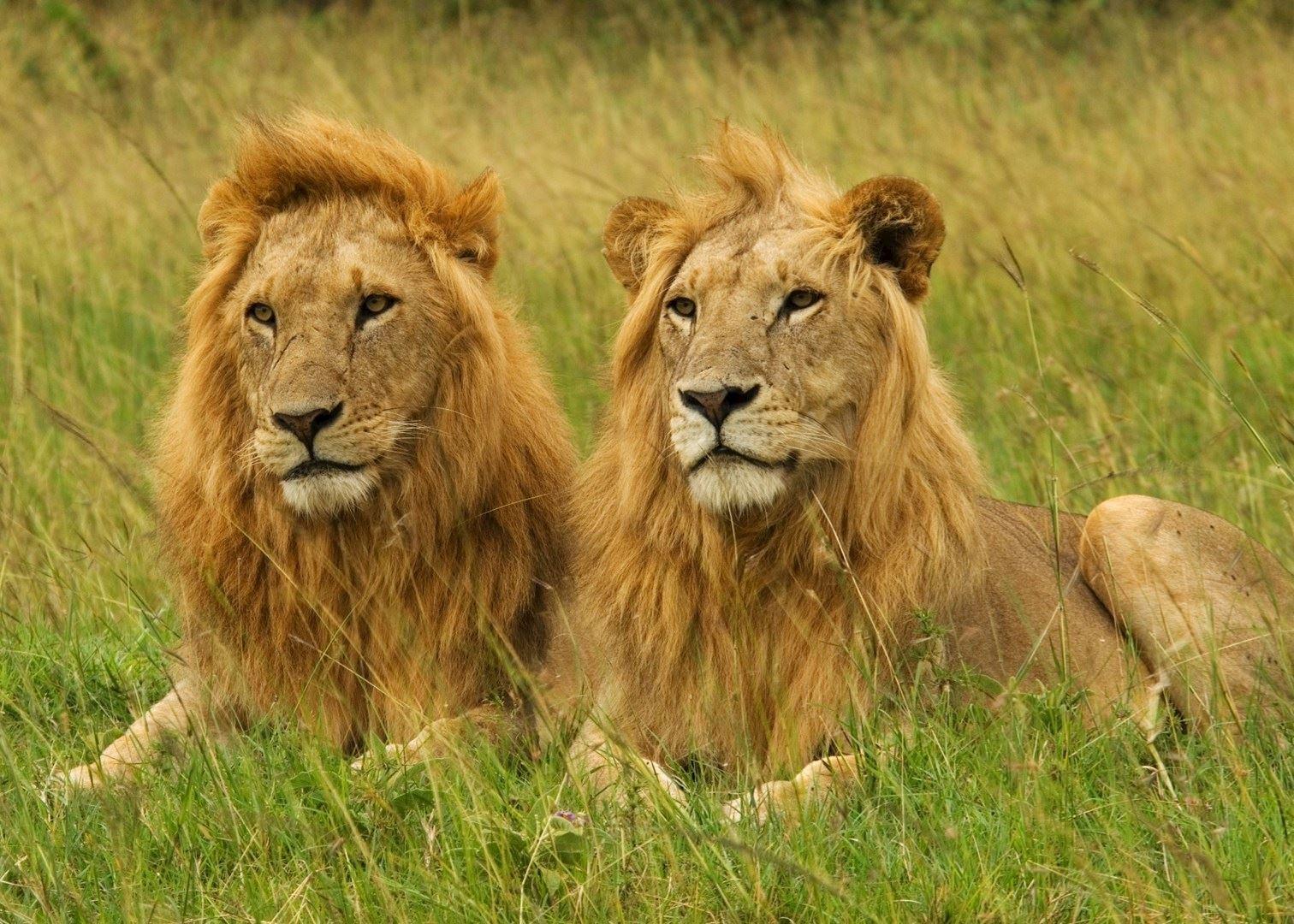 Luxury Kenya safari & beach | Audley Travel