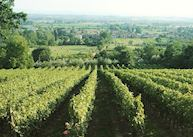 View of the vineyards, Il Falconiere, Cortona