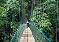 Suspension Bridge at Selva Verde