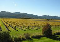 Vintner's Retreat, Blenheim & The Winelands