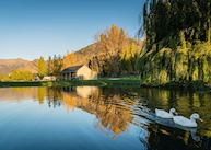 Ducks on the pond, Kinross Cottages, Queenstown