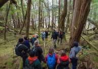 Kaisun Rainforest Walk - Excursion from Ocean House