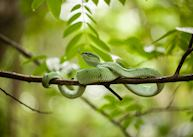 Snake on nature trail in Borneo
