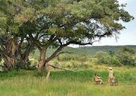 Makweti Safari Lodge, Welgevonden