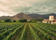 Viñas de Cafayate vineyard