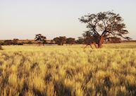 View of the surrounding area from the Kalahari Anib Lodge, Southern Namibia
