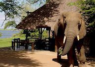 Elephant at Chiawa Camp, Lower Zambezi National Park