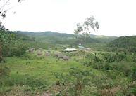 Eulophélia, Andasibe-Mantadia National Park