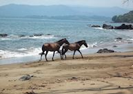 Wild horses, Copa de Arbol Beach & Rainforest Resort, Copa de Arbol
