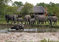 Simbambili Game Lodge, The Sabi Sand Wildtuin