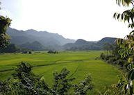 Mai Chau Rice Paddies
