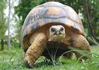 Tortoise, Bird Island Lodge , Bird Island