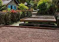 Cocoa Drying, Fond Doux Plantation & Resort, Saint Lucia