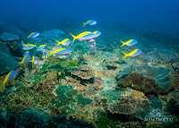 Scuba diving at Nihiwatu, Nihiwatu Resort, Pantai Nihiwatu