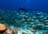 Scuba diving, Petit St. Vincent, Petit St Vincent