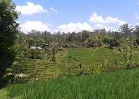 Jatiluwih Ubud