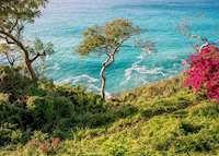 Guana Island, Guana Island