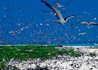 Sooty Tern Point, Bird Island Lodge, Bird Island