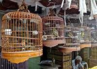 Bird Market on Kowloon Island