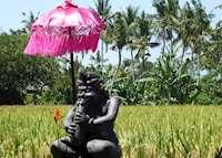 Rice fields outside of Ubud