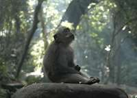 Monkey Forest, Ubud, Indonesia