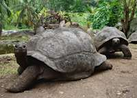 Giant Tortoises, La Digue