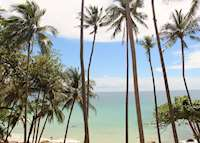 Beach views and palm trees