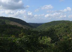 View from Buena Vista coffee plantation