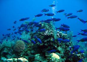 Sealife, Placencia