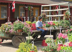 Amish boy selling flowers near Toronto