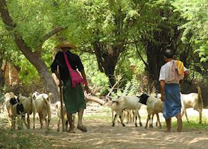 Rural life, near Mandalay