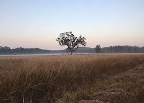 Kanha at sunrise