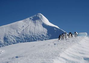 Adelie penguins on iceberg, Antarctica