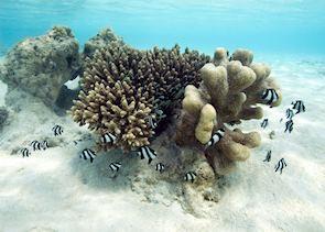 Aitutaki, The Cook Islands