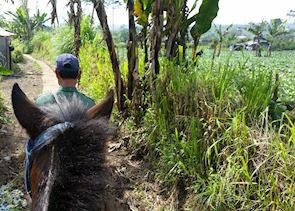 Munduk horse riding excursion