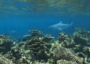 Marine life, Maldives