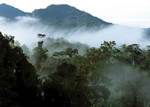 Dawn at Gunung Api, Mulu National Park, Sarawak