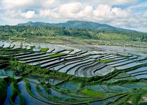 Paddy fields outside Ubud, Indonesia
