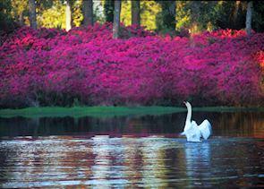 Airlie Gardens, Wilmington