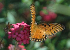 Placencia's wildlife, Belize