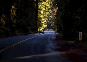 Redwood National Park, The USA