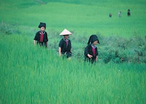 Hmong tribes in fields near Sapa