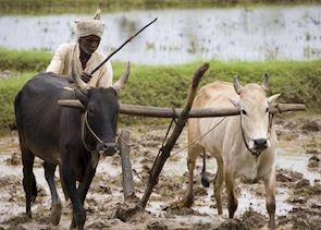 Working the fields, Chettinad, India